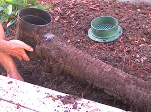 Ginny Stibolt A Transplanted Gardener In Florida