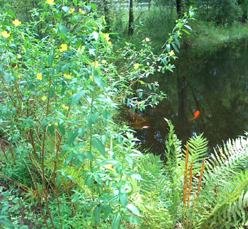 Ferns & Seedboxes line the pond