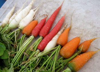 Red & orange carrots and white radishes.Photo by Stibolt