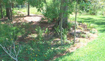 Ginny removed the lawn from around these trees and shrubs. Photo by Ginny Stibolt