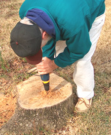 Drilling the stump - Photo by Stibolt