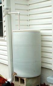 Single rain barrel near vegetable garden.  Photo by Stibolt.