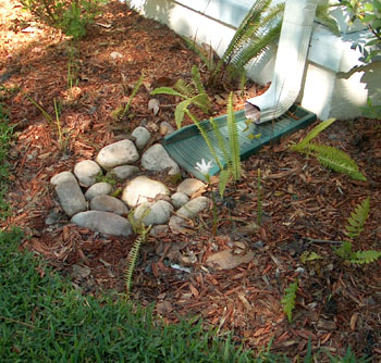 Sustainable Gardening For Florida By Ginny Stibolt The